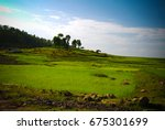 Small photo of Agriculture landscape with fields of teff at morning in Amhara, Ethiopia