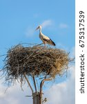 Small photo of Stork stands guarding the nestlings in his nest - Banya, Bulgaria