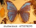 iridescent blue butterfly in a...   Shutterstock . vector #675378295