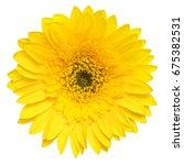 Top View Of Yellow Gerbera...