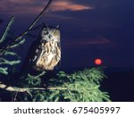 owl perching on tree branch | Shutterstock . vector #675405997