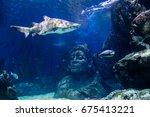 the tiger shark in underwater.... | Shutterstock . vector #675413221