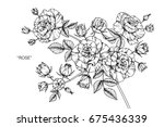 rose flowers drawing and sketch ... | Shutterstock .eps vector #675436339