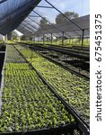 greenhouse to cultivated seeds...   Shutterstock . vector #675451375