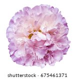 peony flower white pink on a... | Shutterstock . vector #675461371