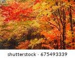 Fall Foliage On The Blue Ridge...