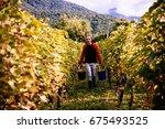 a farmer is harvesting grapes... | Shutterstock . vector #675493525