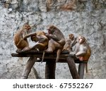 A Group Of Monkeys