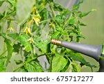 close up shot of a gardener...   Shutterstock . vector #675717277