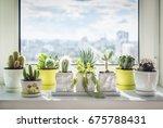 House Plants On Window. Cactus...