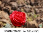 red rose | Shutterstock . vector #675812854