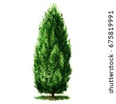 green beautiful cypress tree... | Shutterstock . vector #675819991