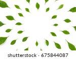 green leaves on white... | Shutterstock . vector #675844087