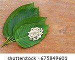 mitragyna speciosa  kratom ... | Shutterstock . vector #675849601