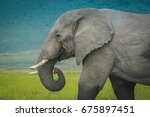 head of a large african... | Shutterstock . vector #675897451