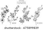 wild rose  rose  magnolia ... | Shutterstock .eps vector #675899839