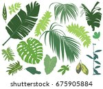 set of tropical leaves isolated ... | Shutterstock .eps vector #675905884