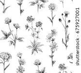 pencil drawings of wild flowers.... | Shutterstock . vector #675927001