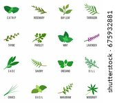 culinary herbs icons set.... | Shutterstock .eps vector #675932881