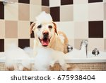 Stock photo bathing of the yellow labrador retriever happiness dog taking a bubble bath 675938404