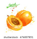 watercolor illustration of... | Shutterstock . vector #676007851