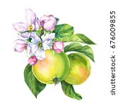 fruits  apples  blossoming... | Shutterstock . vector #676009855