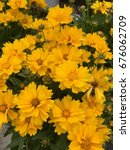 yellow daisy flower with green... | Shutterstock . vector #676062709