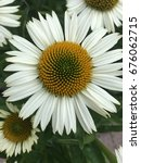 daisy white flowers close up... | Shutterstock . vector #676062715
