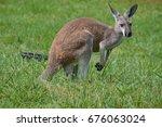 kangaroo | Shutterstock . vector #676063024