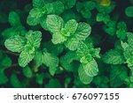 green mint leaves.nature...   Shutterstock . vector #676097155