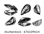 Vector Mussel Set Hand Drawn...