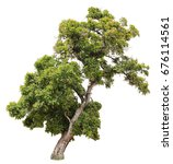 tree on isolate and white... | Shutterstock . vector #676114561
