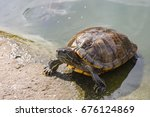 turtle crawl along the pond. | Shutterstock . vector #676124869