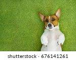 jack russell terrier lying on a ... | Shutterstock . vector #676141261
