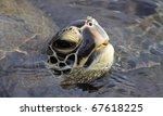 Portrait of a Green turtle (Chelonia mydas) near Kona (Big Island, Hawaii) - stock photo