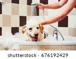 Stock photo bathing of the yellow labrador retriever happiness dog taking a bath 676192429