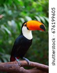 colorful tucan in the aviary | Shutterstock . vector #676199605