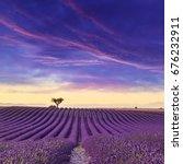 lavender field summer sunset...   Shutterstock . vector #676232911
