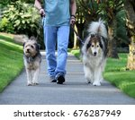 Stock photo walking dogs 676287949