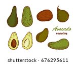 avocado varieties vector set