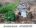 detail of edible mushroom...   Shutterstock . vector #676348789