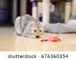 Stock photo gray white tabby cat plays with a cat feather toy 676360354