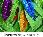 colorful lupine leaves with... | Shutterstock . vector #676400419