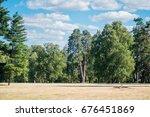 field meadow trees pine trees... | Shutterstock . vector #676451869