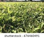 green grass | Shutterstock . vector #676460491