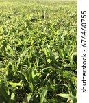 green grass | Shutterstock . vector #676460755