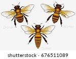 set of three honey bees. queen... | Shutterstock .eps vector #676511089