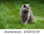 british blue cat gazing on lawn | Shutterstock . vector #676576729