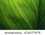 Green Leaf Texture Background...