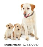 Stock photo dog and cute puppies on white background 676577947